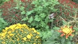 Free Washington: Ботанический сад