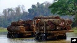Η ΕΕ απαγόρευσε την εισαγωγή και πώληση παράνομης ξυλείας