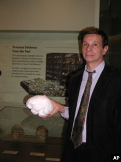 Alain Froment, curator of anthropology collections at the Musee de l' Homme in Paris, with the braincase of a Cro-Magnon, reconstructed in minute detail from a computer scan of the 28,000-year-old skull.
