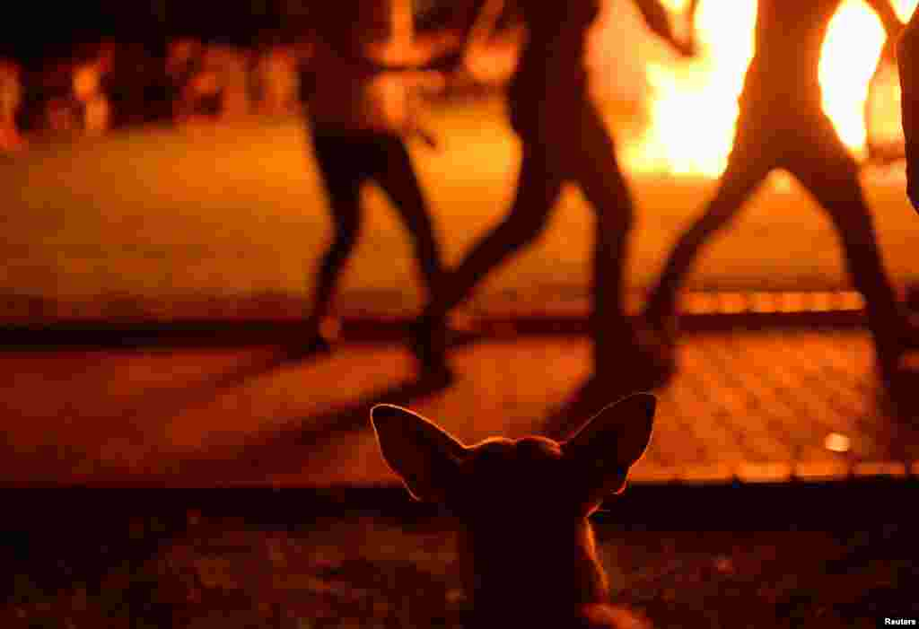 A dog watches women dance around a bonfire during the traditional San Juan's (Saint John) night in the Basque coastal town of Mundaka, northern Spain.