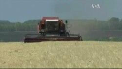 Як Україні заробити мільярди на харчах для світу - розказали у Вашингтоні. Відео