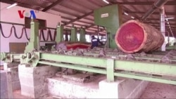 Gabon Committed to Expanding Wood Industry