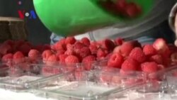 Mexico Exports Fresh Berries to China