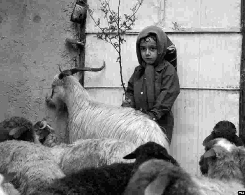 دخترک چوپان- اشکور عکس: بهزاد یوسفی (ارسالی شما)