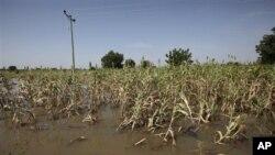 خسارت مالی وجانی جاری شدن سیلاب در دو ولسوالی ننگرهار