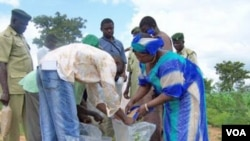 People sharing and distributing aflasafe on a farm in Nigeria. (File)