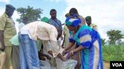 Petani Nigeria sedang saling membagikan Aflasafe untuk menurunkan kontaminasi racun Aflatoxin, yang pernah menewaskan sedikitnya 125 orang di Kenya.