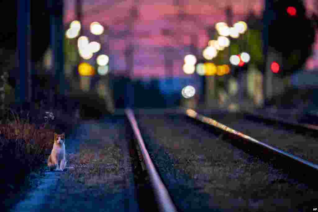 A cat goes for an early morning walk near subway rails in Frankfurt, Germany.