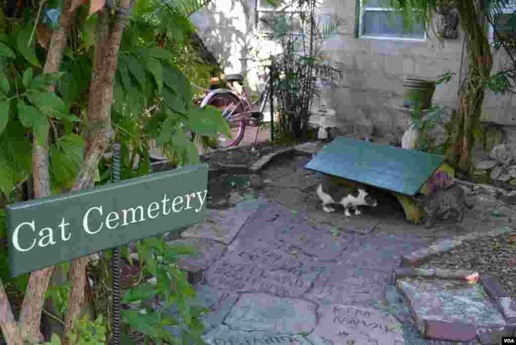 Кошачье кладбище.