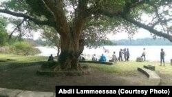 Hora Arsadee, Bishooftuu, Oromiya