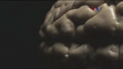 Serie TV sobre el cerebro