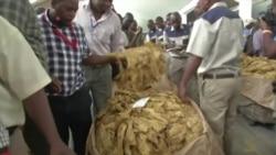 New Zimbabwe Farmers Boost Latest Tobacco Sales