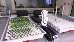 Robotlaşdırılmış ferma ucuz yerli məhsul vəd edir