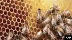 Пчеловодство – одно из современных «зеленых» предприятий