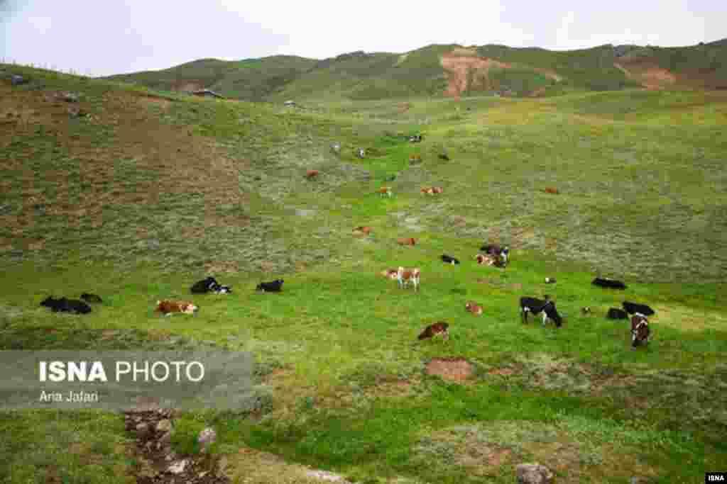 طبیعت ییلاق (سوباتان) تالش - گیلان عکس: آریا جعفری