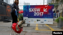 A dog up for adoption, is taken for a walk by the organization Austin Pets Alive, during the South by Southwest (SXSW) Music Film Interactive Festival 2017 in Austin, Texas, March 12, 2017.