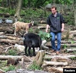 Christian Zimmerman, Wakil Presiden Manajemen Modal dan Lansekap Prospect Park Alliance, berfoto dengan kambing yang digunakan untuk menghilangkan semak invasif di wilayah Brooklyn di New York City, AS. (Foto: dok).