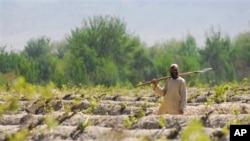 تلاش حکومت افعانستان برای تصرف مجدد 'وانت وایگل' نورستان