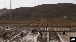 2011年4月17日,在北韓城市開城外的一個農田﹐工人正在工作。北韓常年糧食短缺在2011年已經達到了危機點。