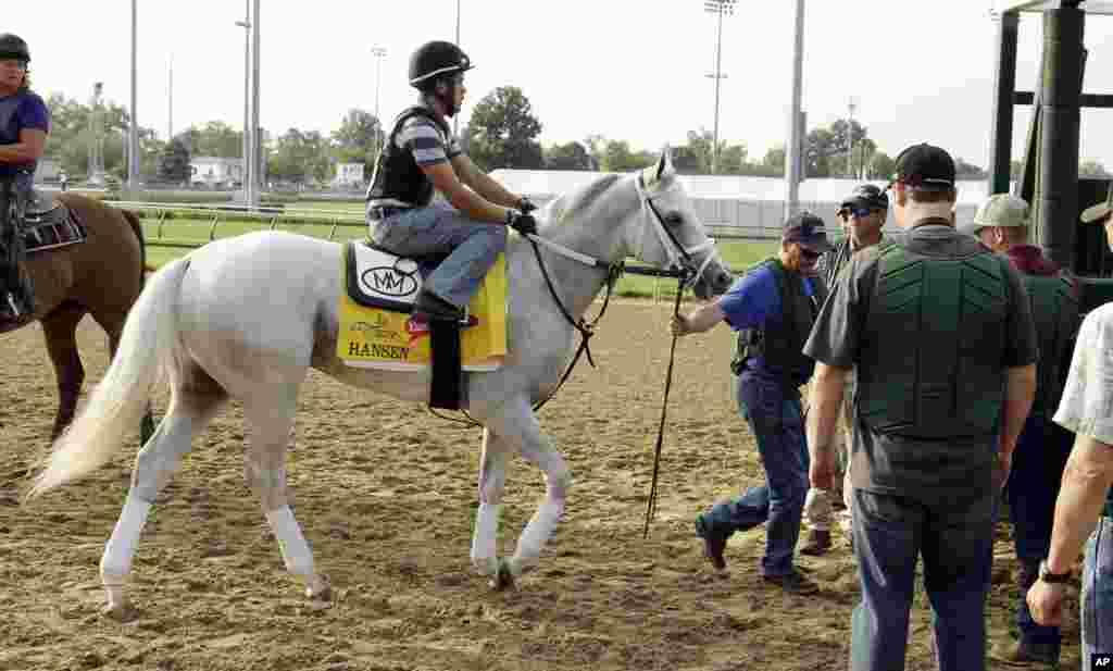 El tordillo Hansen practica la salida en la pista de Churchill Downs en preparación para el Kentucky Derby que se corre este sábado 5 de mayo de 2012. (AP Photo/Garry Jones)