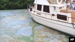 Tras recorrer el río St. Lucie, que pasa por el centro de Stuart, los problemas se pueden remontar al historial de Florida de desviar agua hacia el mar.