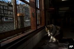 گربه های ولگرد تحت مراقبت قرار دارند.