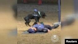Собака продемонструвала на поліцейському, як правильно робити масаж серця