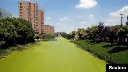Prekomerno cvetanje algi u reci u Šangaju, 30. jul 2014.