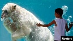 미국 일리노이주 시카고의 링컨 공원 동물원의 북극곰 '리'.