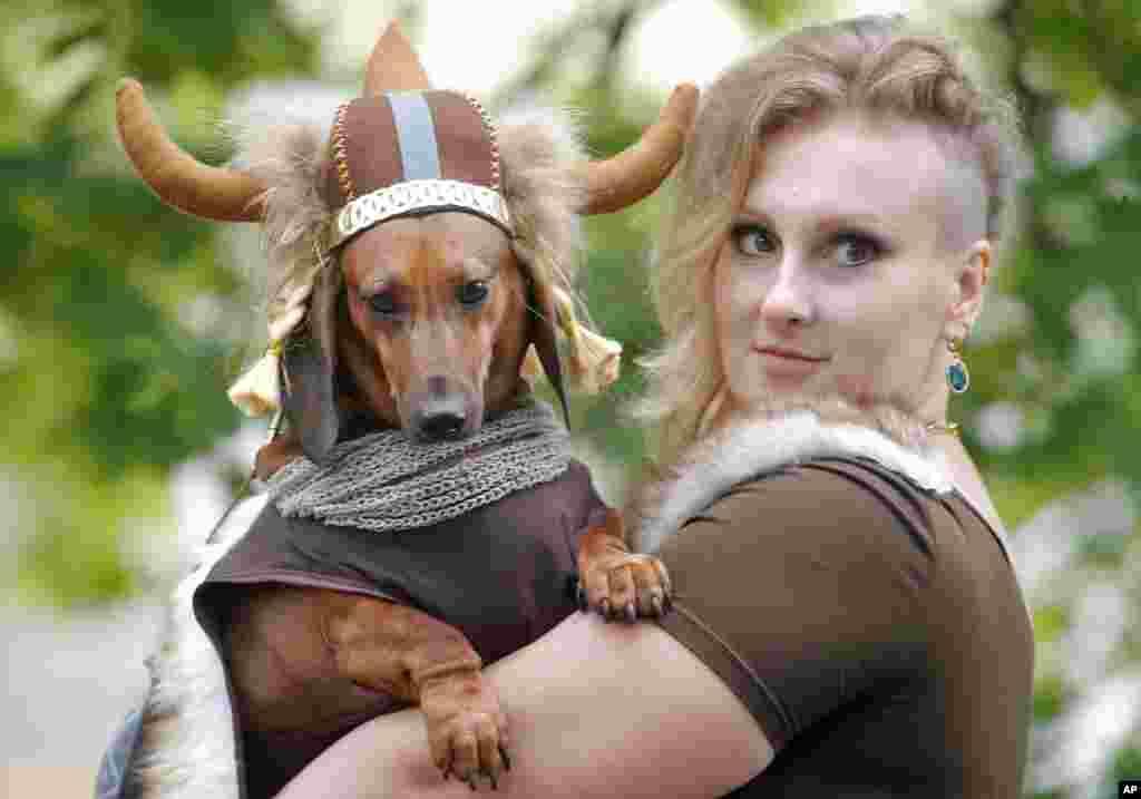 به بهانه رژه سگهای پاکوتاه در سنتپترزبورگ روسیه - در رژه سالهای قبل برخی سگ شان را مثل این، به شکل وایکینگها در آوردند. سگهای پاکوتاه و دراز یا «داکسهوند»علاقه زیادی به کندن زمین و عوعو کردن دارد.