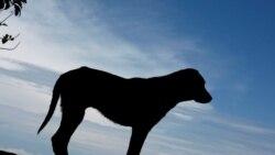 Cães vadios matam em Nampula