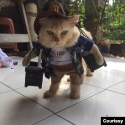 Foto-foto pakaian kucing (Koleksi Pribadi Fredi Lugina)
