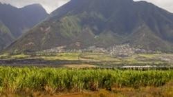 [타박타박 미국 여행 오디오] 사탕수수밭서 일군 아메리칸 드림, 하와이