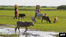 물을 길어오는 케냐 동부 마을의 아낙네들. (자료사진)