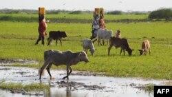 Dua etnis di Kenya terlibat konflik karena memperebutkan lahan subur di kawasan Tana River delta di Kenya timur (foto: dok).
