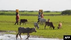 Perempuan Kenya membawa air di kawasan Sungai Tana, Kenya timur (foto: dok). Bentrokan antar etnis sering terjadi di Kenya akibat sengketa lahan pertanian.