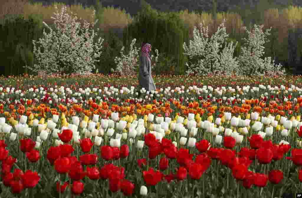 Kašmirka u šetnji vrtom tulipana u Srinagaru, Indija.