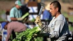 En 2015, 48 por ciento de los trabajadores del sector agrícola y ganadero y 28 por ciento de los trabajadores del sector de la construcción eran hispanos trabajando al aire libre y en riesgo debido a las altas temperaturas.