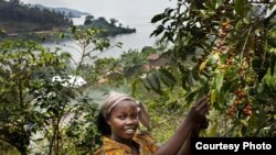 Bichera Ntamwinsa,23, picks berries from her coffee plants in Bukavu, Democratic Republic of the Congo. Farmer field schools and agricultural cooperatives can help smallholder farmers gain skills while strengthening their common voice. (UNESCO/Tim Dirven/