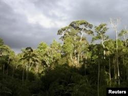 جنگلات کاربن ڈائی اکسائیڈ جذب کر کے گلوبل وارمنگ میں کمی لاتے ہیں۔