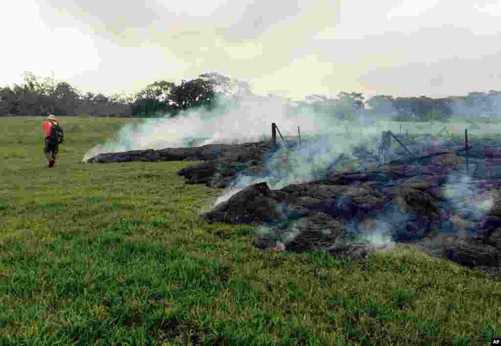 This photo provided by the U.S. Geological Survey shows a Hawaii Volcano Observatory geologist mapping the margin of the June 27 lava flow in an open field below Cemetery Road near the town of Pahoa on the Big Island of Hawaii, Oct. 26, 2014.