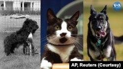 Собака Рузвельта Фала, кіт Клінтонів Сокс та собака Байденів Мейджор