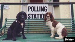 As Britons head to the polls to decide whether or not to stay in the EU, many took photos of their dogs at the polls, causing a Twitter trend.(@SuperGooders)