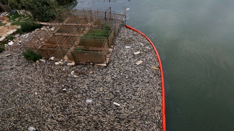 Iraq Fish Farmers Hit by Carp Deaths, Amid Fears Over Pollution