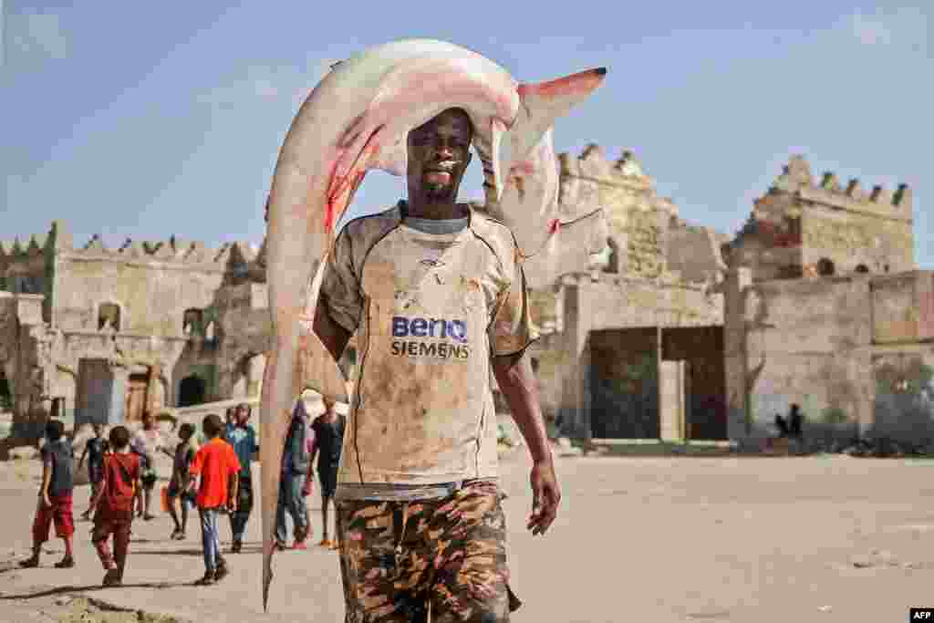 A Somali fisherman carries a hammerhead shark on his head to the Hamarweyne fish market near the port in Mogadishu, Somalia.