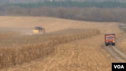 Уборка урожая. Украина. Архивное фото