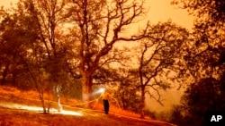 14 Eylül 2021 - California'daki Sekoya Ulusal Parkı'nda yangın tehlikesine karşı müdahaleler devam ediyor