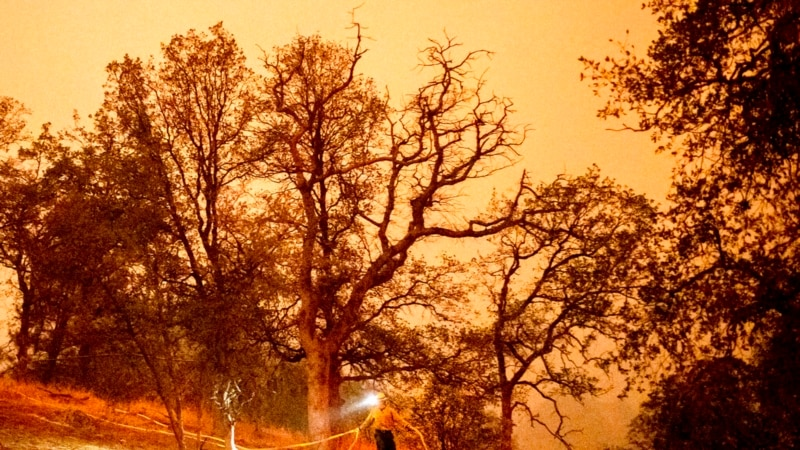 Fighting Fire with Fire in US to Protect Sequoia Trees...