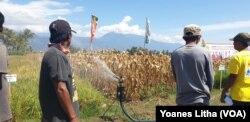 Demonstarasi irigasi menggunakan water gun sprinkler yang dapat menghemat penggunaan air, 15 Agustus 2019. (Foto: VOA/Yoanes Litha)