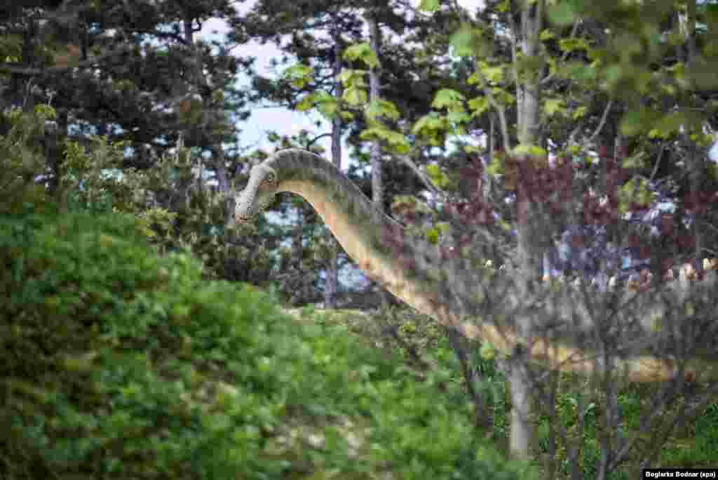គំរូសត្វដាយណូស័រ Diplodocus ត្រូវបានដាក់តាំងនៅឯឧទ្យានសត្វបុរេប្រវត្តិនៅសួន Veszprem នៅក្រុង Veszprem ចម្ងាយ ១០៨ គីឡូម៉ែត្រពីរដ្ឋធានីប៊ុយដាប៉េស ប្រទេសហុងគ្រី។ គំរូសត្វដាយណូស័រចំនួន ៣០ ត្រូវបានដាក់បង្ហាញនៅក្នុងឧទ្យានទំហំពីរហិចតា ដែលជាកន្លែងតាំងពិព័រណ៌សត្វបុរេប្រវត្តិធំជាងគេបង្អស់នៅប្រទេសហុងគ្រី។